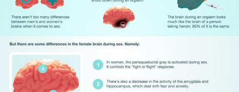 The Brain On Sex