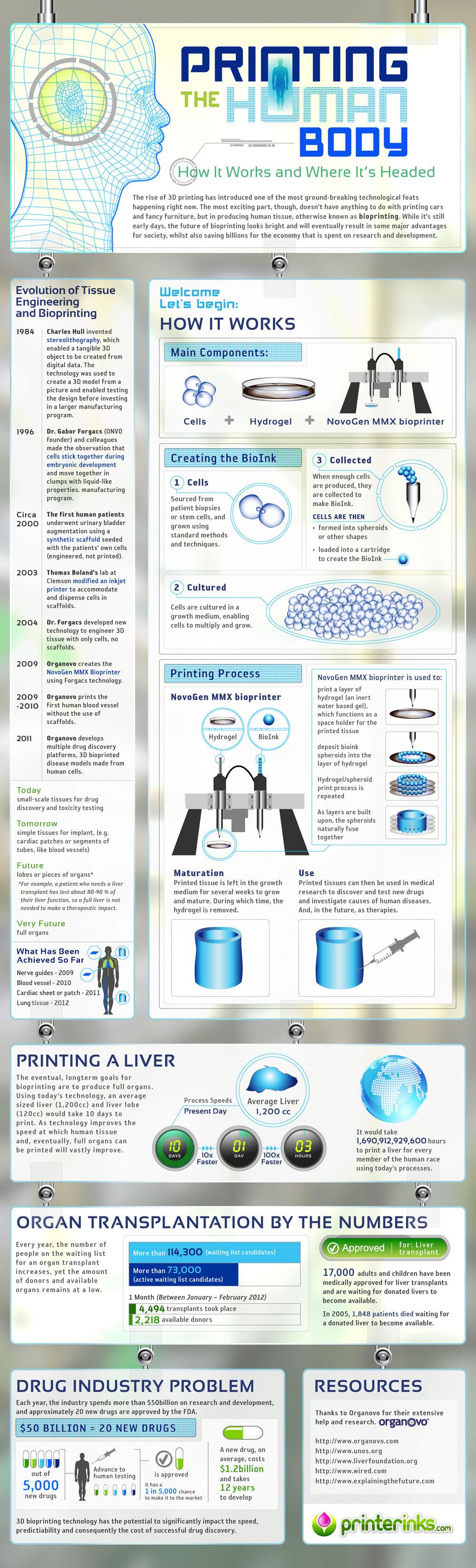 Human Body Printing-infographic