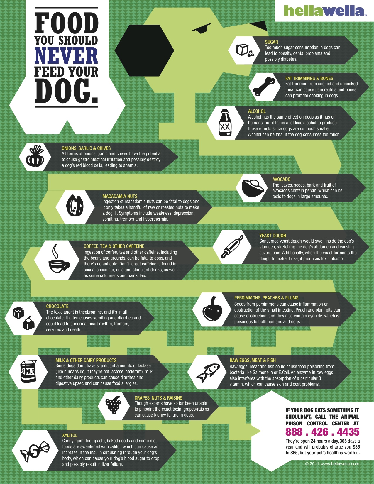 Food Dogs Should Avoid-infographic