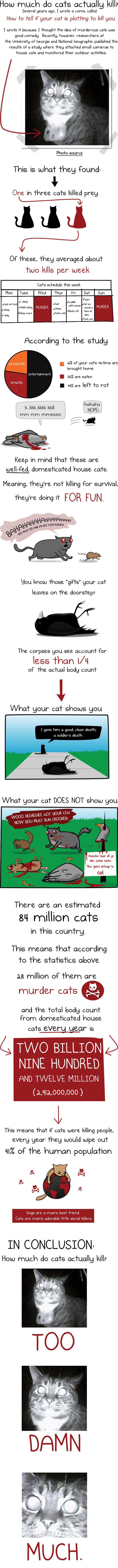 Cats Love Murder-Infographic