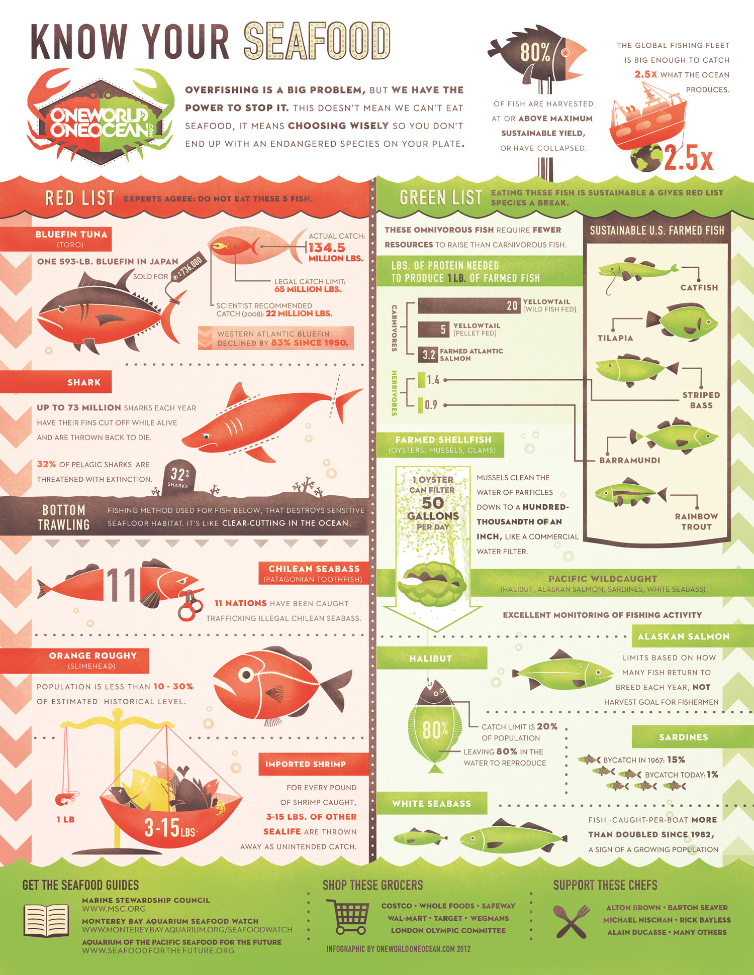 Overfishing Statistics-Infographic