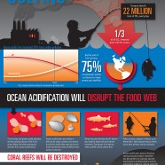 Oceans Carbon Pollution