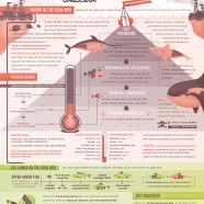 Seafood Risks