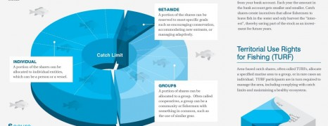 Fishery Catch Share Definition