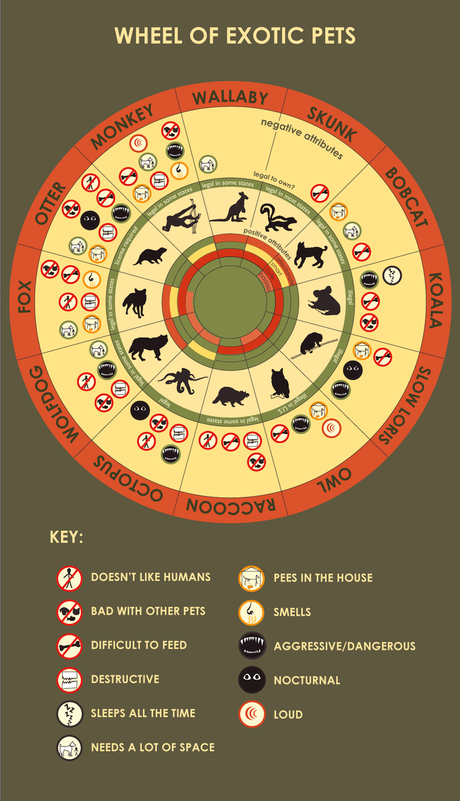 Exotic Animals as Pets Guide-Infographic