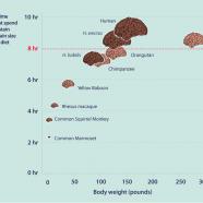 Food in Human Evolution