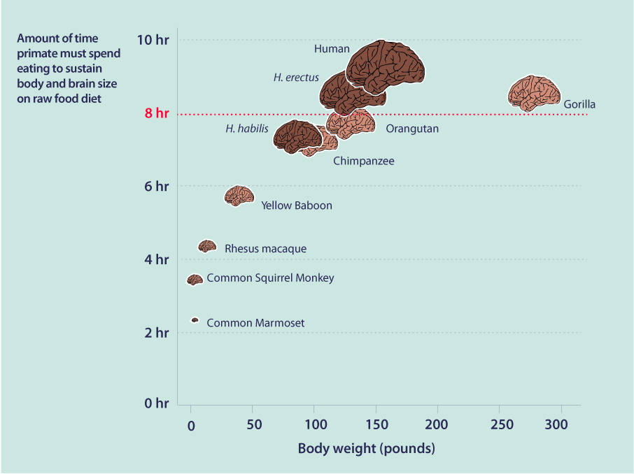 Food in Human Evolution-Infographic