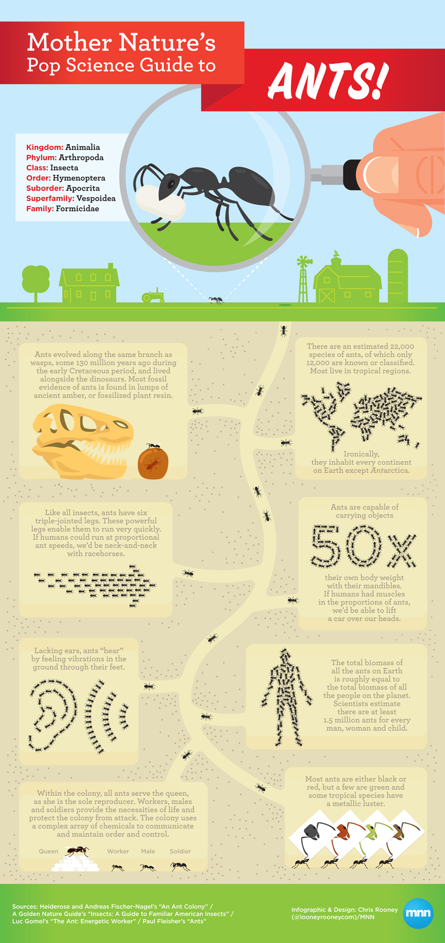 All About Ants-Infographic