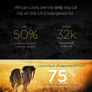 Save African Lions
