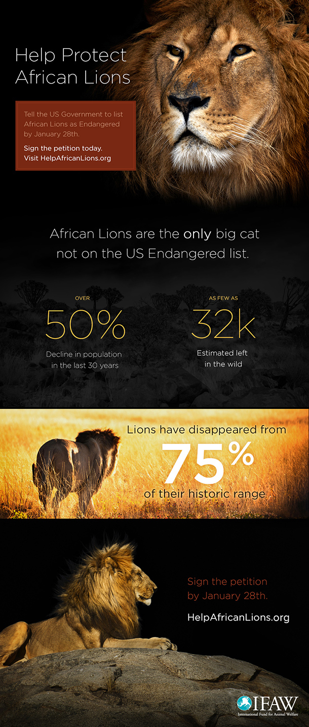 Save African Lions-Infographic