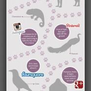 Social Media Animality