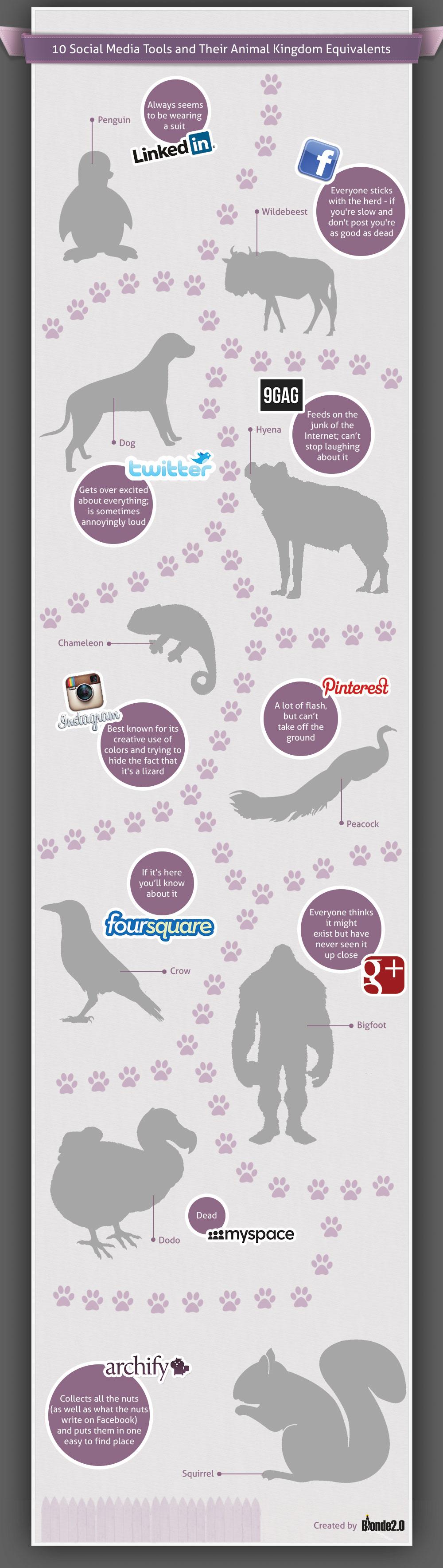 Social Media Animality-Infographic