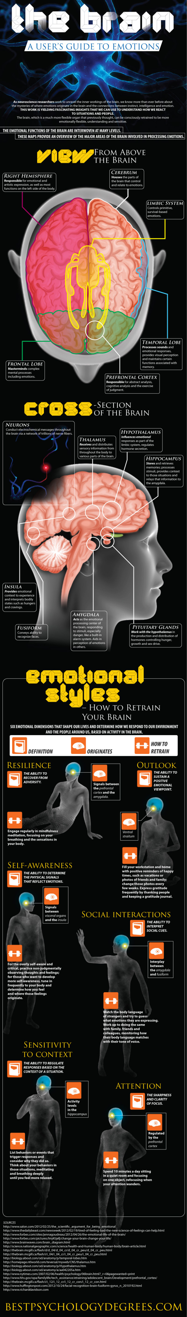 Brain Emotional Processing-Infographic