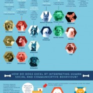 Domestic Dog Evolution