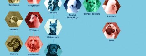 Domestic Dog Evolution