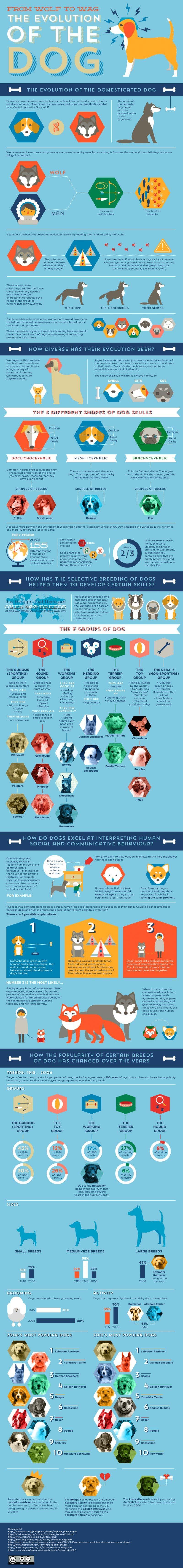 Domestic Dog Evolution-Infographic
