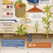 American GMO Stories