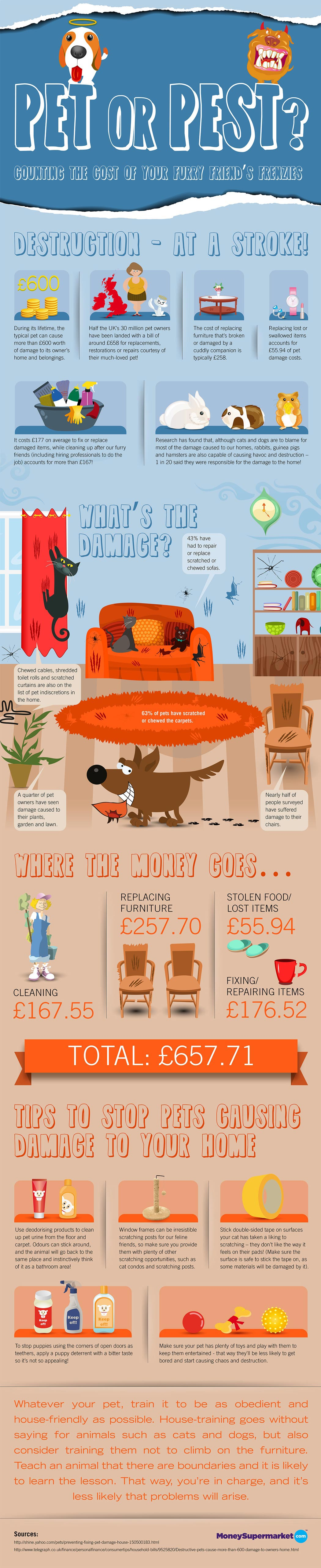 Pet Proof Home-Infographic