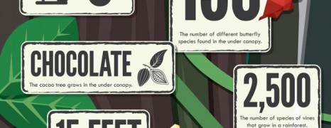 What to Know About Rainforests