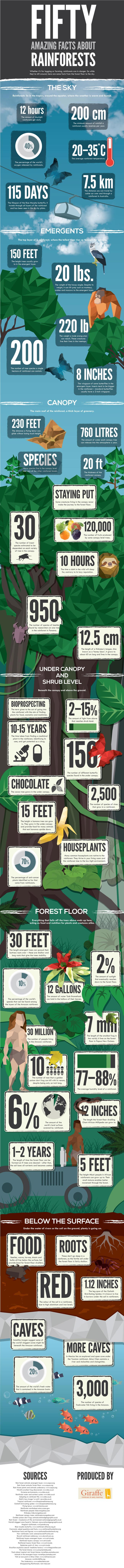 What to Know About Rainforests-Infographic