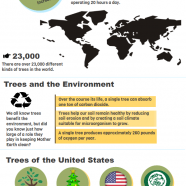 What to Know About Trees