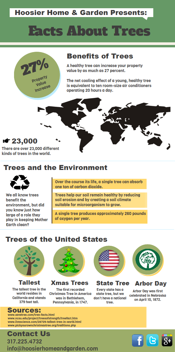 What to Know About Trees-Infographic