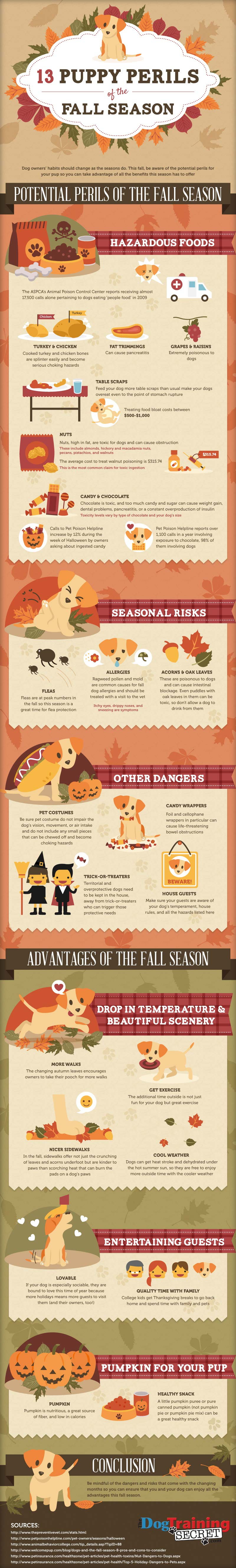Puppy Care Tips in Fall-Infographic